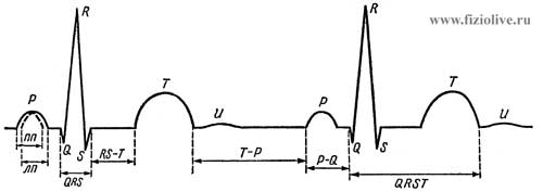 ЭКГ сердца. Зубцы, сегменты и интервалы ЭКГ